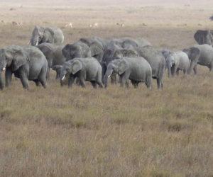 Tanzania Journeys