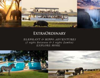 Elephant & Hippo Adventurers