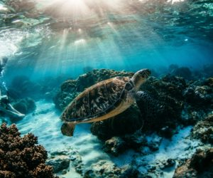 Live an Underwater Adventure in the Philippines – World Class Diving in the Apo Reef Marine Life National Park