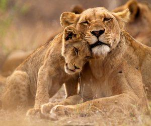 Early Morning Safari in Nairobi National Park